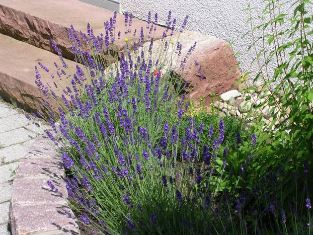 Winkler kreative g rten landschaftsbau gartenbau ihr for Pflanzen im raum